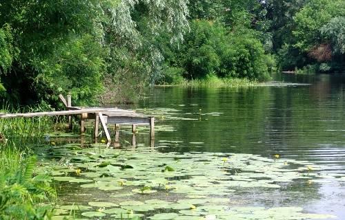 Практически идеальное место для рыбалки