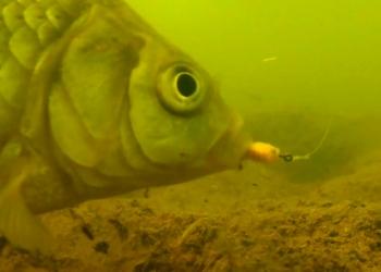 Учимся вываживать рыбу со дна водоёмов