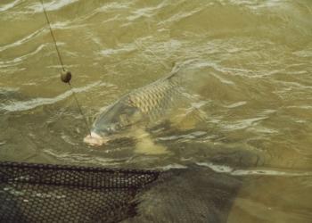 Рыбалка в летнее время года