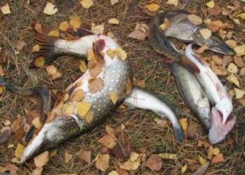 Рыбалка осенью: прогноз клева в сентябре, октябре, ноябре