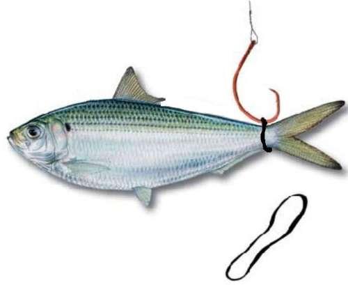 живец к рыбалки дать на лапу на туле