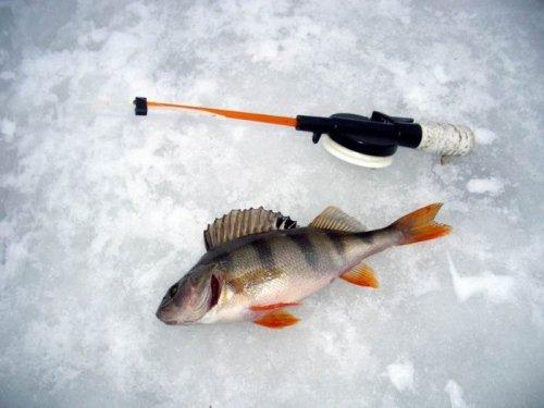 Удачная зимняя рыбалка на окуня