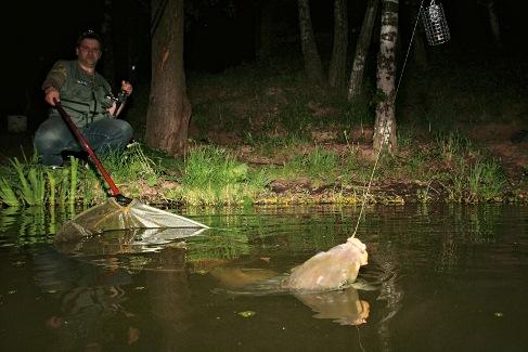 Ловля белого амура в ночную пору