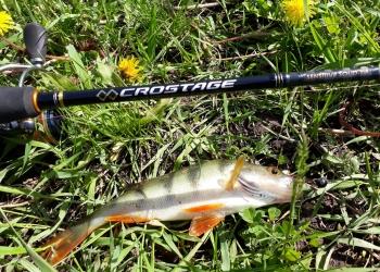 Как ловить на спиннинг рыбу?