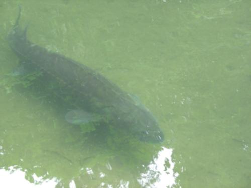 Рыба в мутной воде