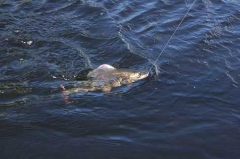 Рыбная ловля на быстром течении