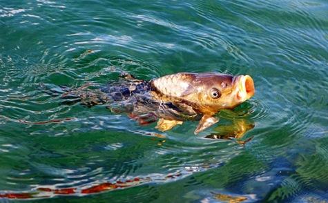 Рыбная ловля на фидер