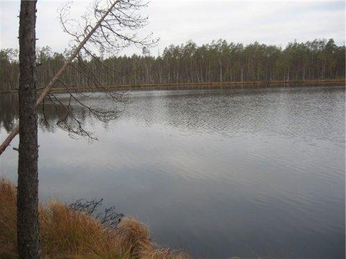 Мутная вода на озере