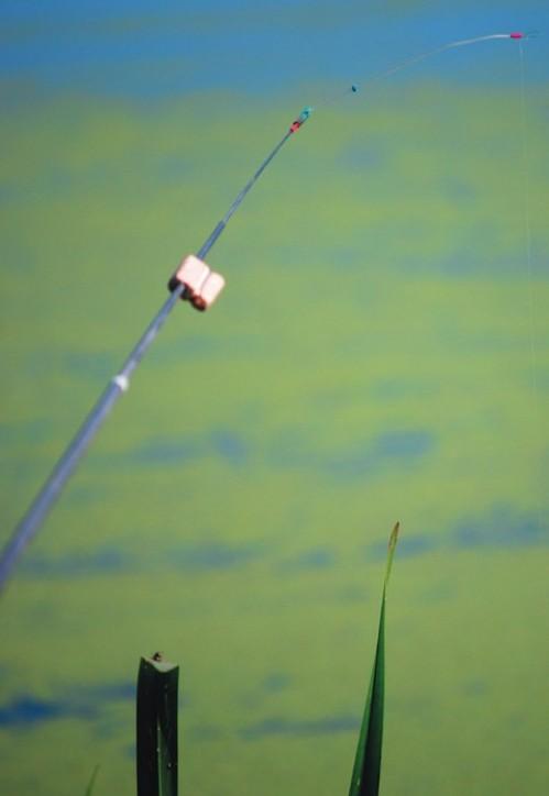 как ловить рыбу на летний кивок