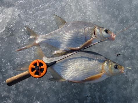 Рыбалка на чертика зимой