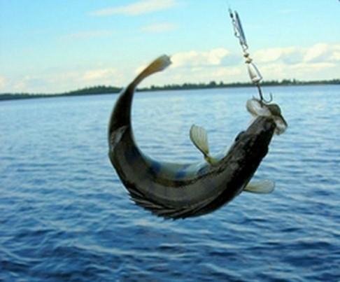 Поводок для рыбной ловли
