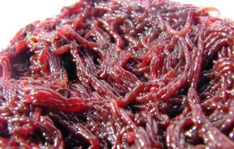 состав прикормки для рыбы