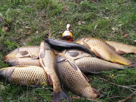 Чтобы получить такой улов, нужно правильно выбрать местность для рыбалки