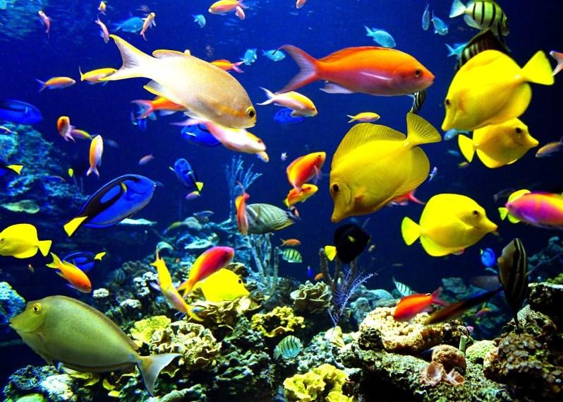 Если рыба не клюет, знайте – она есть, просто «занимается своими делами»