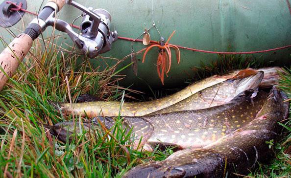 Нерестовый запрет рыбной ловли