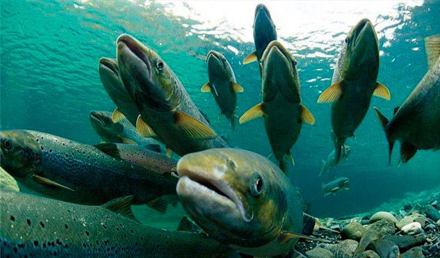 Берегите рыбу, насколько это возможно