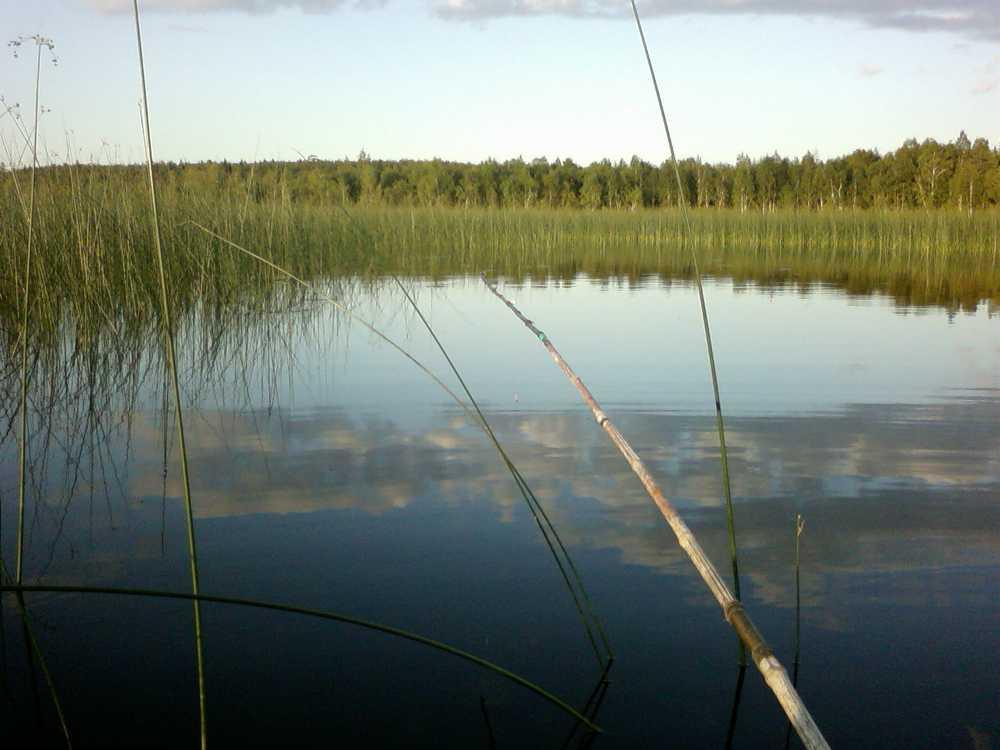 Тихий тёплый летний вечер для рыбалки