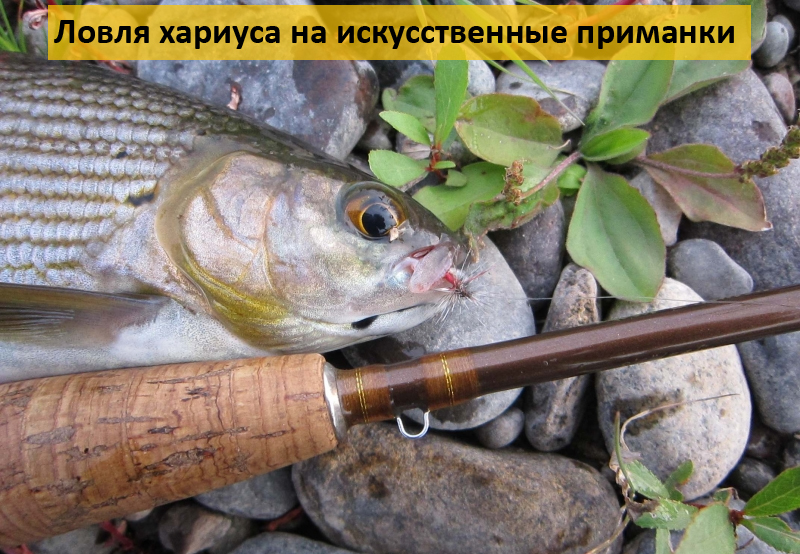 где и как ловят хариуса в рыбалке 3