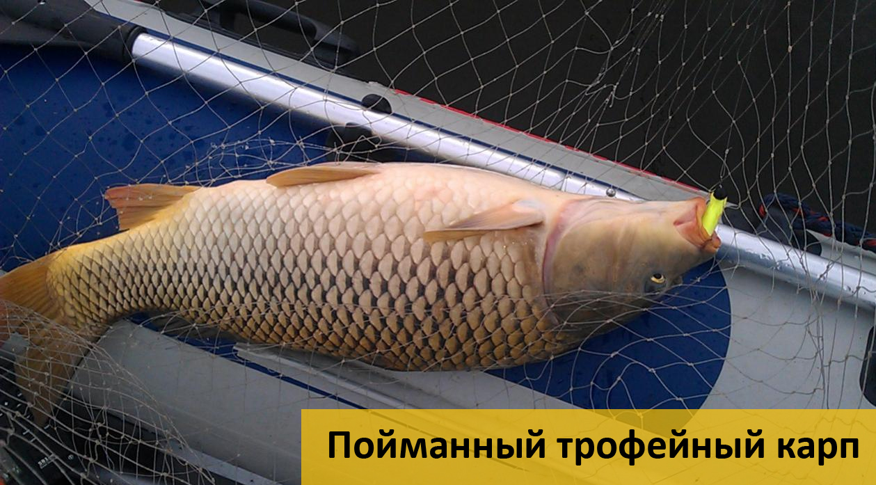 пшеница на рыбалку