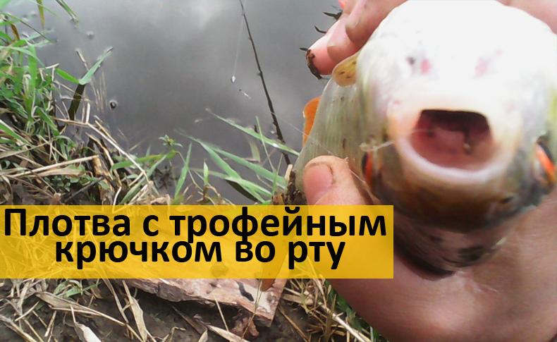 какую рыбу ловят в июне