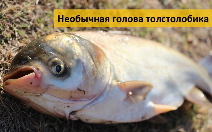 клев рыбы в лубнах