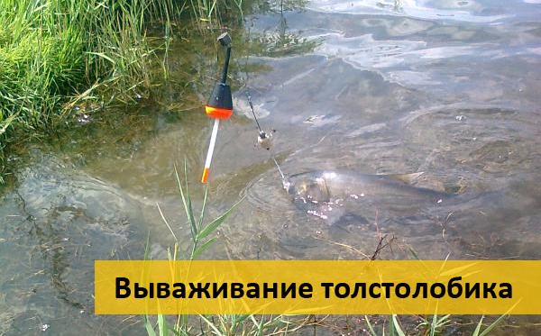 ловля толстолобика на технопланктон со дна предпочтение