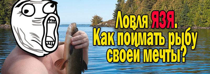прикормка для рыбы летом