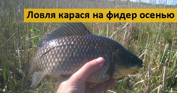 рыбалка на леща осенью на фидер