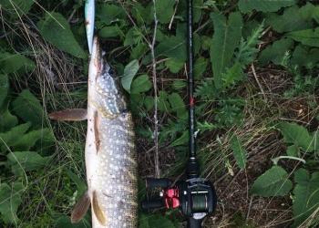 Ловля щуки на спиннинг, секреты популярной рыбалки