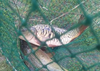 Ловля карпа: как ловить рыбу на платных водоемах