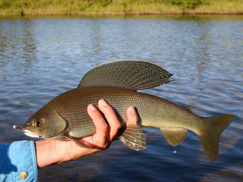 рыбалка на озере харатас