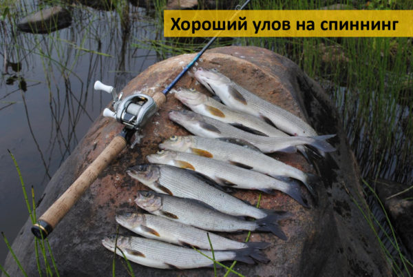 Ловля хариуса на спиннинг в Сибири