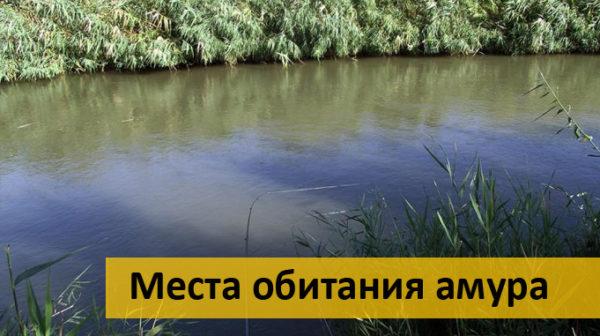 Река с обильной растительностью