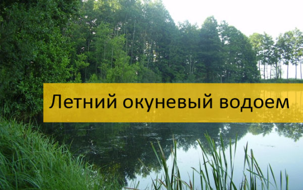 Летний окуневый пруд
