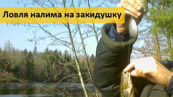 Ловля налима: фидерная ловля, ловля на стукалку, на закидушку