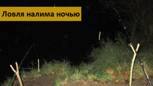 Ловля налима ночью