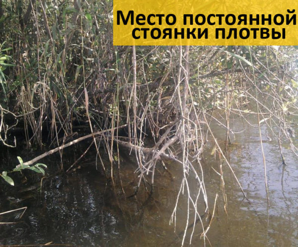Место обитания плотвы