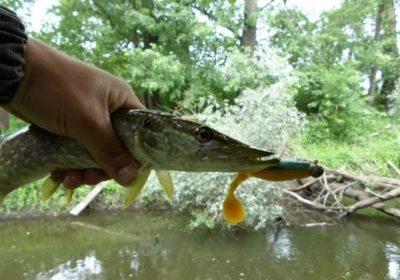 ловля щуки незнакомый водоем