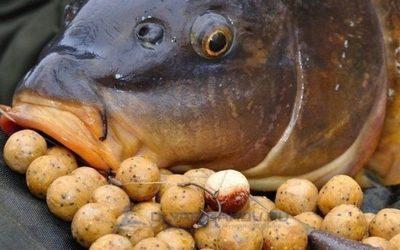 амортизаторы в рыбалке на сазана