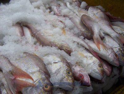 рыба в морозильнике борьба от лигулов