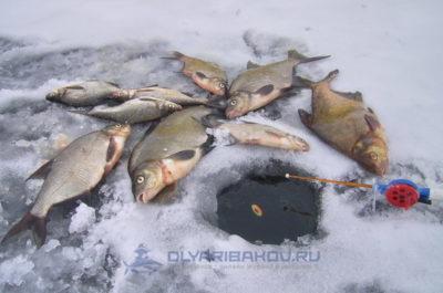 ловли рыбы со льда
